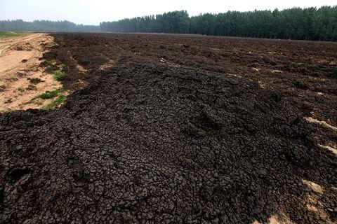 污水处理厂倾倒的污泥