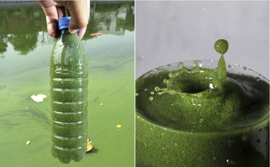 月牙河采取的一瓶绿藻水