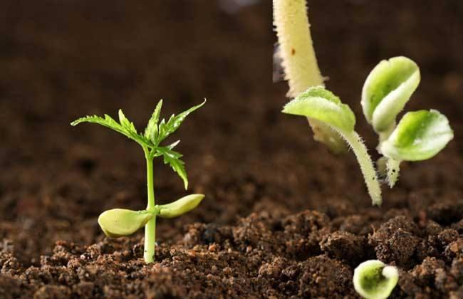有效改善土壤结构